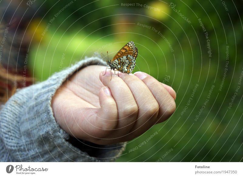 Kleiner Besucher Mensch feminin Kind Mädchen Kindheit Haut Hand Finger 1 Umwelt Natur Tier Sommer Garten Schmetterling Flügel frei hell klein nah natürlich
