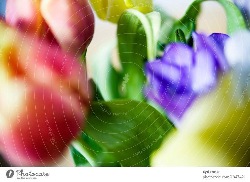 Buntmacher Lifestyle schön Leben harmonisch Wohlgefühl Zufriedenheit Dekoration & Verzierung Natur Pflanze Frühling Sommer Blume Tulpe einzigartig Freude