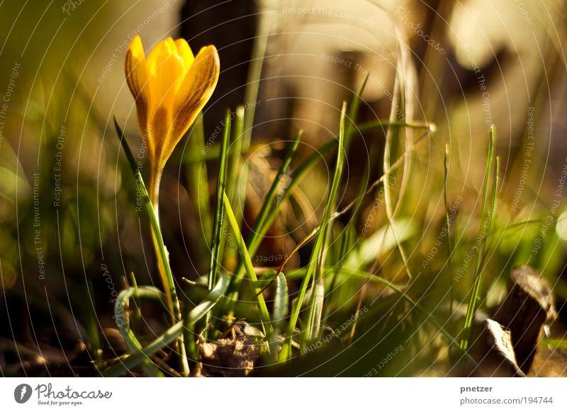 Sonne Umwelt Natur Frühling Sommer Pflanze Blume Gras Blatt Blüte Park Wiese Blühend genießen Lächeln leuchten Duft frei Freundlichkeit Glück gut schön