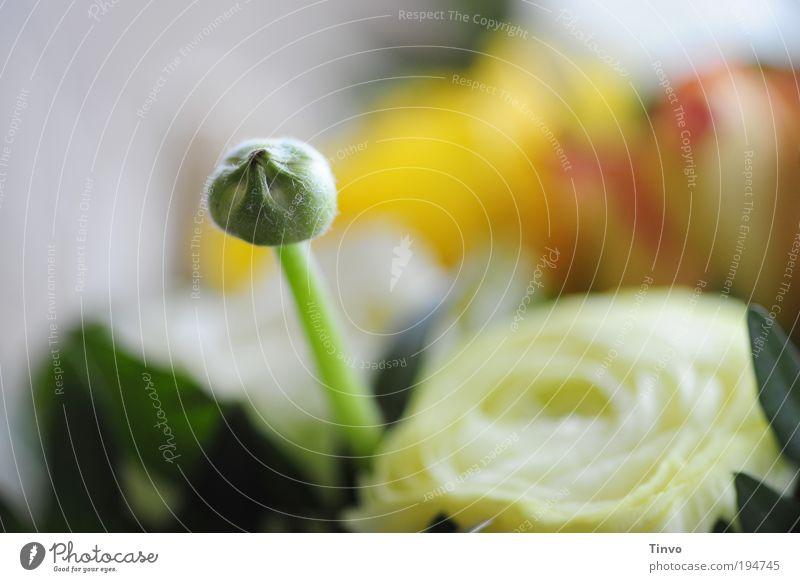 Frühlingsanfang Blume grün Blatt gelb Blüte Frühling Kraft Hoffnung Neugier Blumenstrauß Verliebtheit Blütenknospen Optimismus Vorfreude Sympathie Frühlingsgefühle
