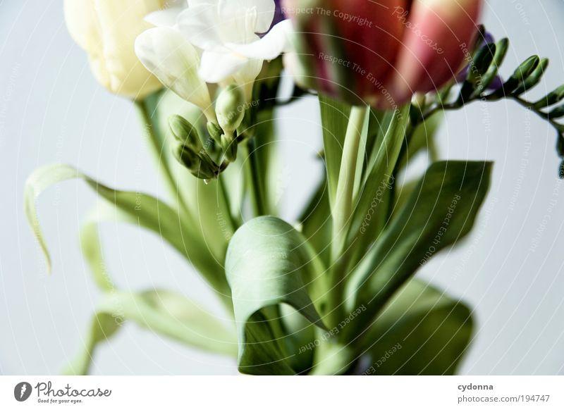 Frühling in der Nase Natur schön Pflanze Sommer Blume Freude Blatt Leben Gefühle Blüte träumen Zufriedenheit Wachstum Dekoration & Verzierung Lifestyle