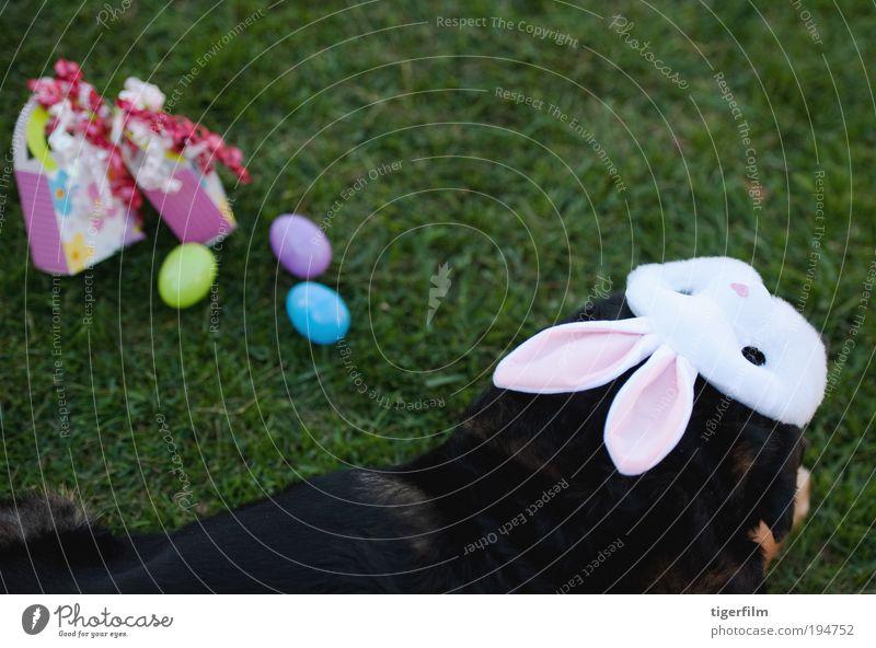"""Hund, der sich dem Spaß an Ostern anschließt. Ei Farbe mehrfarbig Gras Rasen Feste & Feiern Feiertag Feier; """" """"Partygeschenke"""""""". Geschenk Maske Ohr schwarz"""
