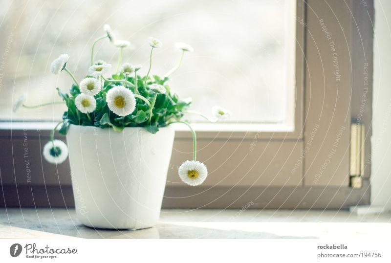 liebe auf der fensterbank. Pflanze Blume Blatt ruhig Erholung Leben kalt Fenster Gras Blüte klein Gesundheit Zufriedenheit Kraft ästhetisch Wachstum