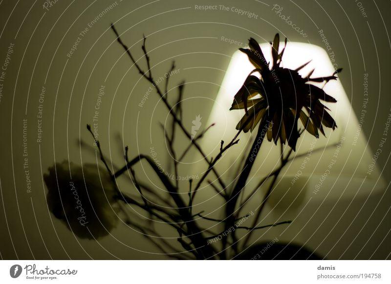 Verwelkte Blume vor Lampe alt weiß grün Pflanze schwarz dunkel Tod kalt Traurigkeit braun Armut leuchten Dekoration & Verzierung trist