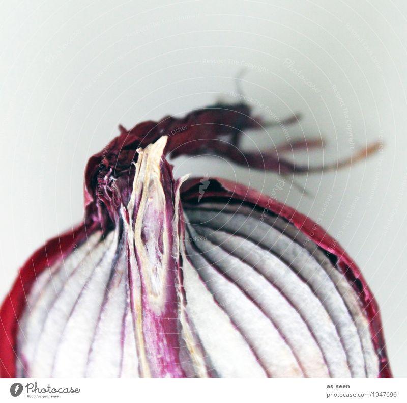 Rote Zwiebel Natur alt Pflanze Farbe weiß rot Gesundheit grau rosa Ernährung ästhetisch authentisch rund Scharfer Geschmack Gemüse Duft
