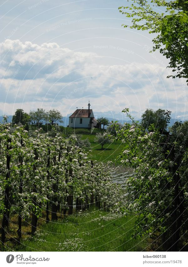 Frühling Berge u. Gebirge Bodensee