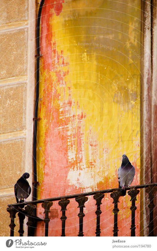 valencia morning Ferien & Urlaub & Reisen schön Sommer rot Tier gelb Wärme Freiheit Vogel Zusammensein Fassade Tourismus Kommunizieren Lebensfreude Spanien mediterran