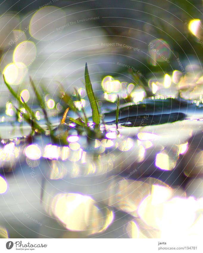 Neuanfang Umwelt Natur Urelemente Wasser Sonne Sonnenlicht Frühling Sommer Klima Klimawandel Schönes Wetter Regen Pflanze Grünpflanze Seeufer Flüssigkeit frisch