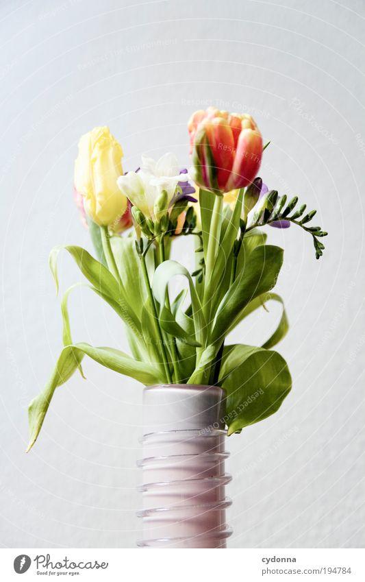 Blumenstrauß Lifestyle schön Leben Wohlgefühl Zufriedenheit Häusliches Leben Dekoration & Verzierung Natur Pflanze Frühling Sommer Tulpe Blatt Blüte Freude