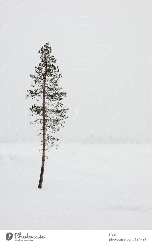 allein Ferien & Urlaub & Reisen Ferne Freiheit Winter Schnee Winterurlaub Umwelt Natur Landschaft schlechtes Wetter Sturm Nebel Pflanze Baum frieren dünn