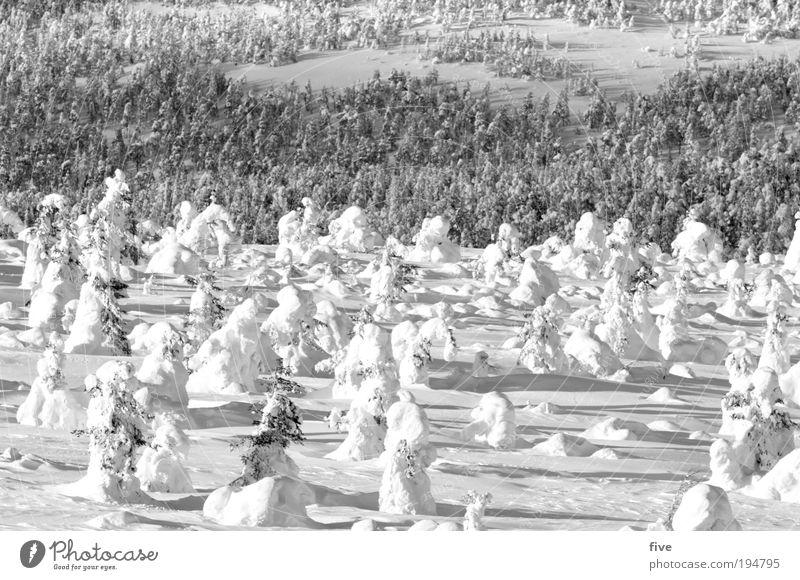 zusammen Natur weiß Baum Pflanze Ferien & Urlaub & Reisen Winter ruhig Ferne Wald kalt Schnee Freiheit Berge u. Gebirge Landschaft Umwelt Hügel