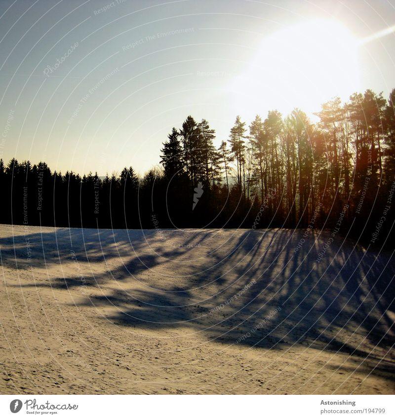 die Schatten werden länger Natur Himmel weiß Baum Sonne blau Pflanze Winter schwarz gelb Wald kalt Schnee Wiese Wärme Landschaft