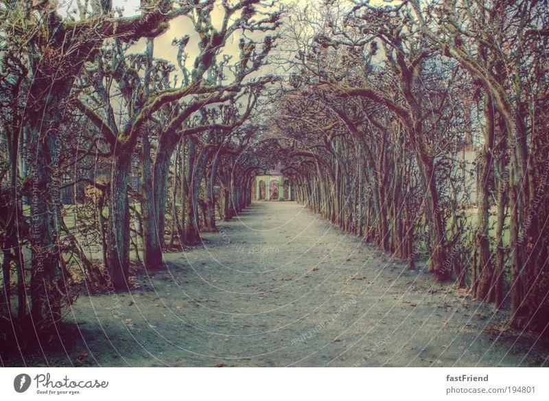 Märchenstunde Erde Baum Garten Park alt trist trocken Endzeitstimmung Symmetrie Wege & Pfade Gedeckte Farben Außenaufnahme Menschenleer Textfreiraum unten
