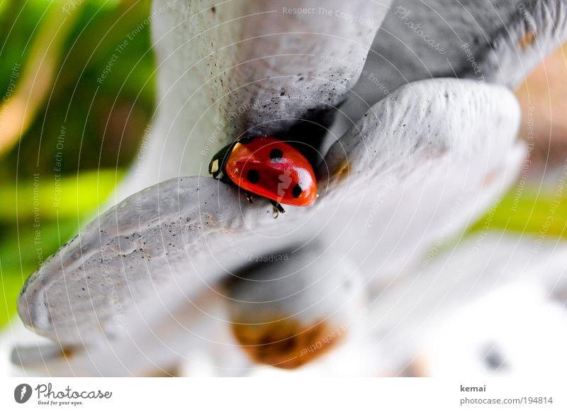 Reingelegt Umwelt Natur Tier Frühling Schönes Wetter Blume Blüte Wildtier Marienkäfer Ladybird Insekt 1 Metall sitzen rot 3 Punkte Gartenzaun Skulptur Rost