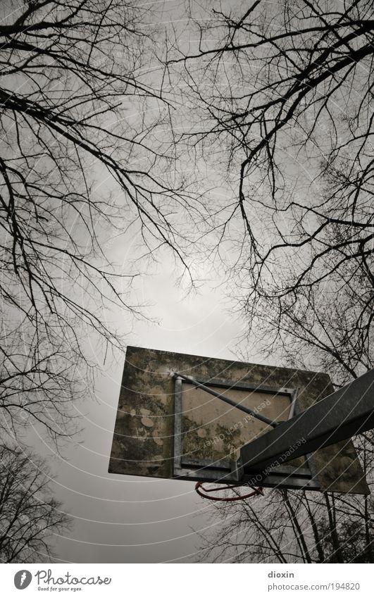 I wish, I was a little bit taller... Lifestyle Freizeit & Hobby Spielen Ballsport Basketball Basketballkorb Sportstätten schlechtes Wetter Pflanze Baum Ast