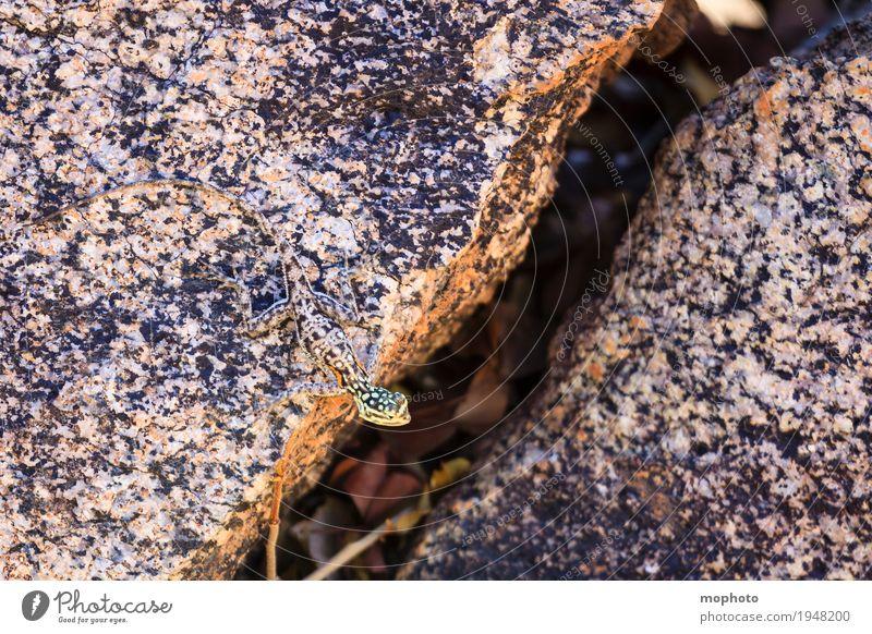 Meister der Tarnung Natur Ferien & Urlaub & Reisen Pflanze grün Tier Umwelt kalt klein außergewöhnlich grau braun Felsen Wildtier ästhetisch beobachten