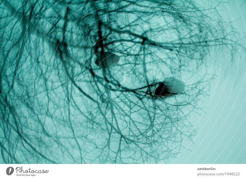 Zeug im Busch Baum Sträucher Ast Zweig Pflanze Dämmerung dunkel Unschärfe drehen verdreht Bewegung Hintergrundbild Froschperspektive