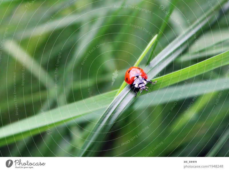 Hallo Frühling Natur Pflanze Sommer Farbe grün rot Tier Umwelt Wiese Gras Garten Ausflug wandern modern Wildtier