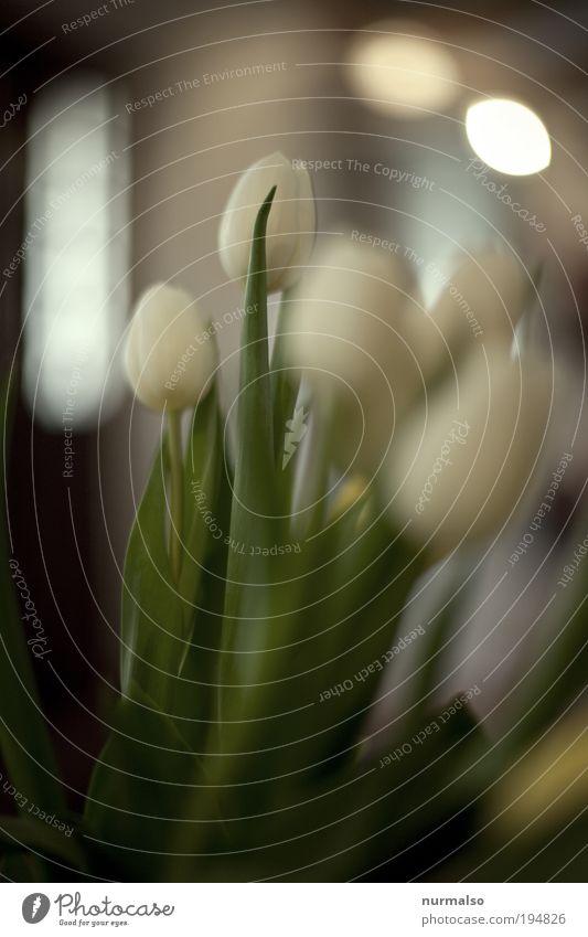 Weisse T Natur schön Pflanze Blume Freude Glück Wärme Stil Kunst Freizeit & Hobby elegant ästhetisch authentisch Dekoration & Verzierung gut Kitsch