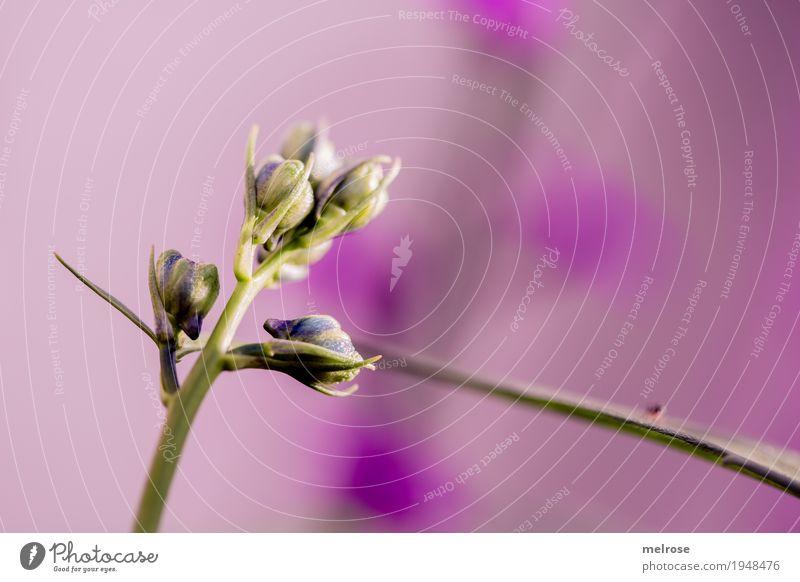 Blütenrausch Natur Frühling Schönes Wetter Pflanze Blume Gras Blatt Wildpflanze Blütenknospen Pflanzenteile Garten Farbenspiel Farbstoff Fleck Punkt Perspektive