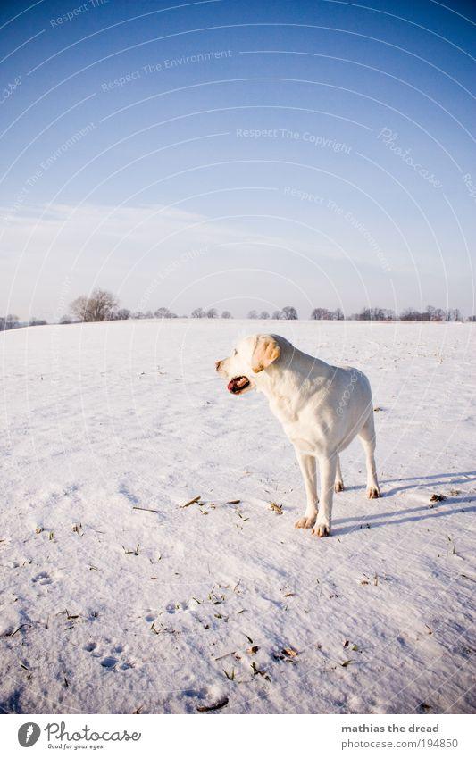 EIN LETZTER BLICK Umwelt Natur Landschaft Himmel Wolken Horizont Sonnenlicht Winter Schönes Wetter Eis Frost Schnee Pflanze Baum Wiese Feld Tier Haustier Hund 1
