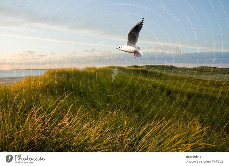 Natur Pur Umwelt Landschaft Luft Wasser Himmel Sonnenlicht Klima Wetter Schönes Wetter Pflanze Gras Wildpflanze Küste Nordsee Tier Vogel 1 fliegen