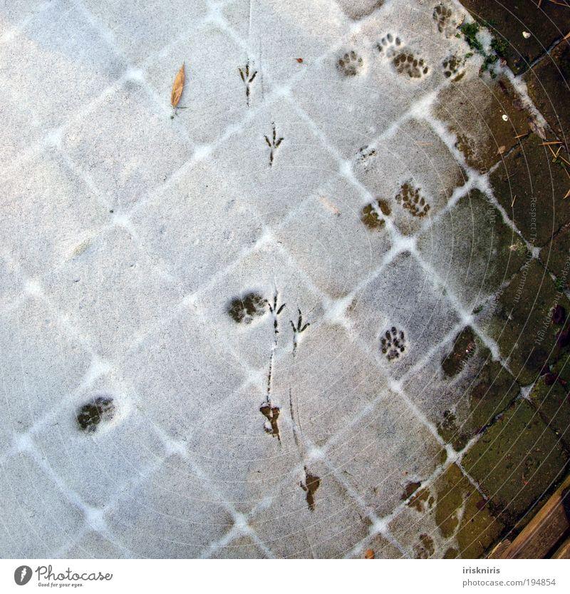 Spuren im Schnee Winter Terrasse Katze Vogel Krallen Pfote Fährte Zufriedenheit Natur Farbfoto Außenaufnahme natürlich kalt Stein laufen ruhig Katzenspuren