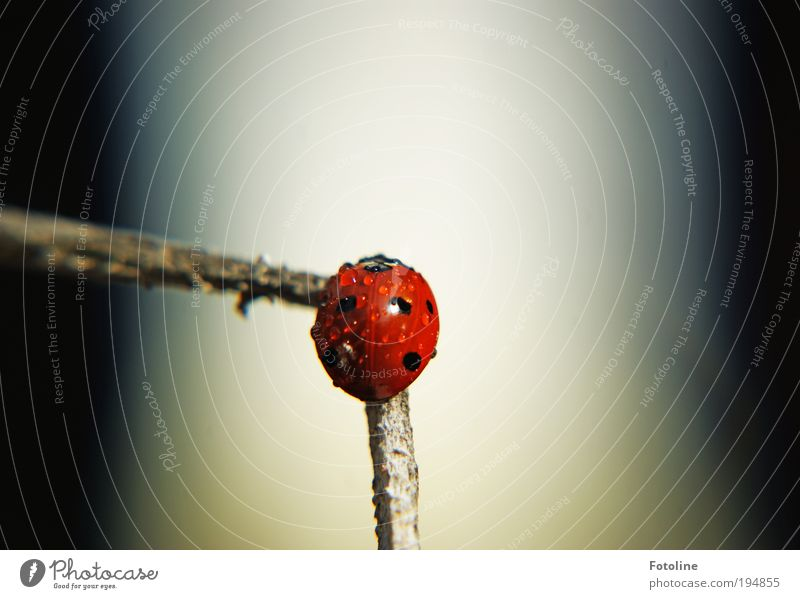 Erstmal trocknen! Umwelt Natur Tier Urelemente Wasser Wassertropfen Frühling Klima Wetter Schönes Wetter Wärme Pflanze Sträucher Park Wildtier Käfer 1 frei hell