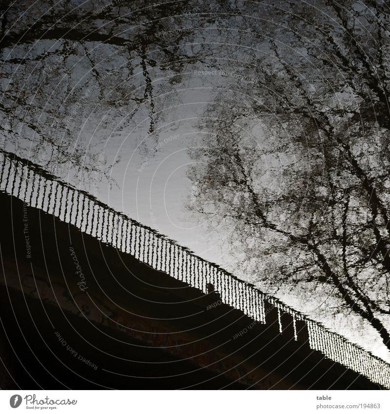 zerrspiegelt Mensch Himmel blau Wasser Baum Pflanze Winter Einsamkeit schwarz Umwelt Straße dunkel Herbst kalt Gefühle Bewegung