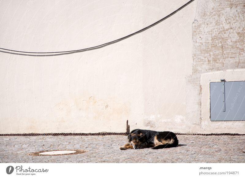 Ein Hundeleben Freizeit & Hobby Sommer Sonne Sonnenbad Mauer Wand Fassade 1 Tier genießen liegen schlafen positiv Geborgenheit Zufriedenheit Einsamkeit Erholung
