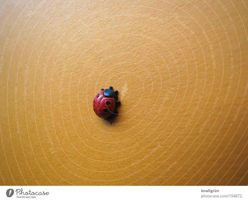 Climbing schön rot schwarz Tier Glück rund Klettern aufwärts Marienkäfer Käfer