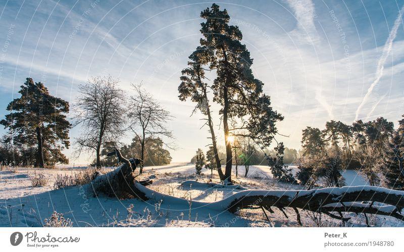 Winter auf der Schwäbischen Alb Himmel Natur Pflanze Sonne Baum Landschaft Wolken Schnee Tourismus Stimmung Zufriedenheit Ausflug Feld wandern Schönes Wetter