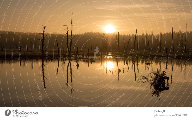 Schwenninger Moos Ferien & Urlaub & Reisen Tourismus Ausflug Freiheit Sightseeing Winter Natur Landschaft Pflanze Wasser Himmel Wolken Sonne Sonnenaufgang