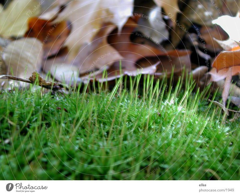 ein stück herbst Blatt Herbst Wiese Gras Makroaufnahme