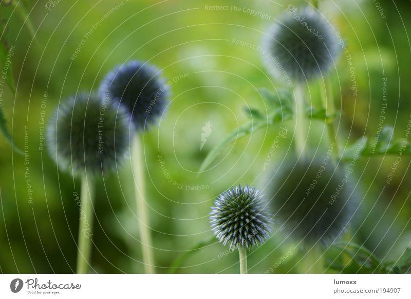 planet of the bees Natur blau grün Pflanze Sommer Blume Blatt Umwelt Gras Blüte Frühling Erde violett Grünpflanze Frühlingsgefühle