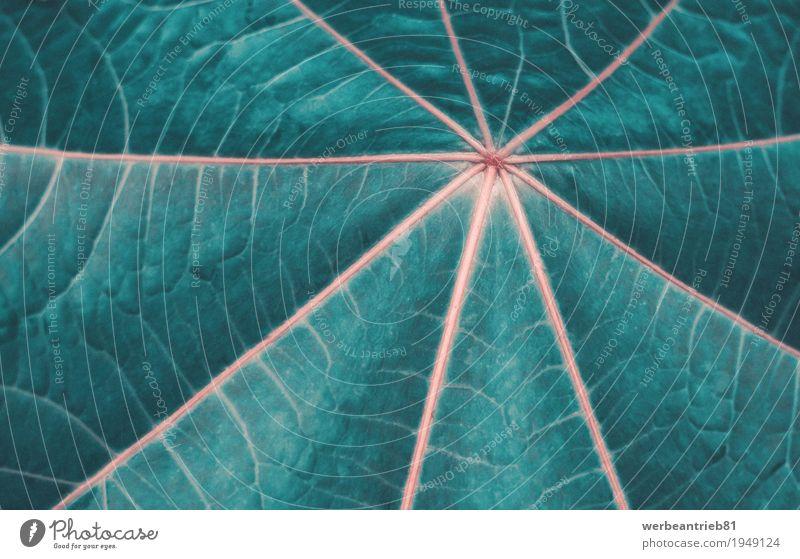 Blattnetz Natur Pflanze Tier Frühling Herbst Grünpflanze exotisch Blühend Fitness Wachstum ästhetisch außergewöhnlich Gesundheit nah grün Design planen