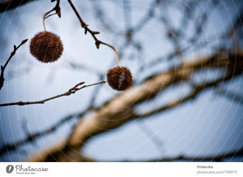 baumschmuck Himmel Natur blau Baum Bewegung Frühling Luft träumen braun ästhetisch rund Urelemente Ast berühren trocken fangen