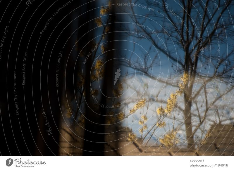 Vorhang auf... Tisch Glastisch Pflanze Himmel Schönes Wetter Baum Blüte Garten Terrasse Fenster blau gelb grau schwarz Farbfoto Tag Licht Schatten Kontrast
