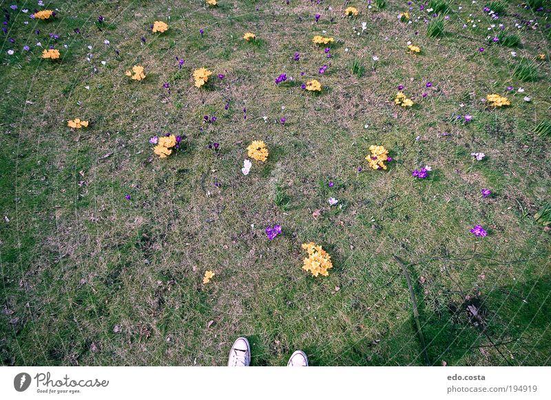 Natur Blume grün Gras Frühling Garten Erde Umwelt genießen Urelemente Sinnesorgane verstört Frühlingsgefühle Morgen Himmelskörper & Weltall