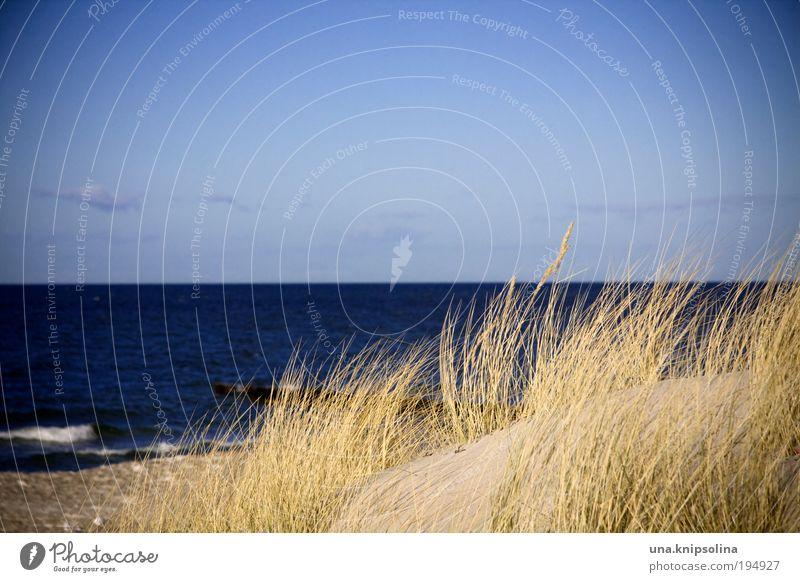 meer seh'n Himmel Wasser Ferien & Urlaub & Reisen Sonne Meer Sommer Strand Ferne Landschaft Freiheit Gras Küste Wellen Ausflug Insel Schönes Wetter