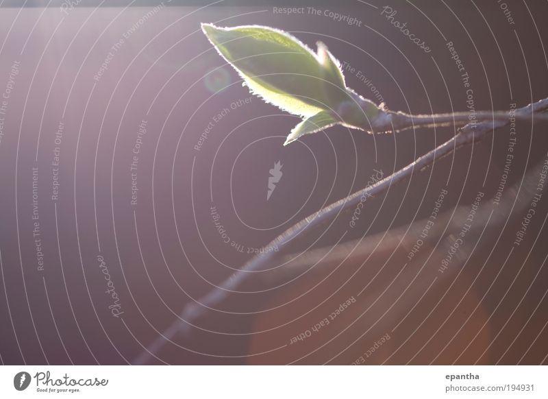 Natur grün Pflanze Blatt Leben Umwelt Frühling Luft braun Gesundheit elegant frisch Klima Wachstum authentisch neu