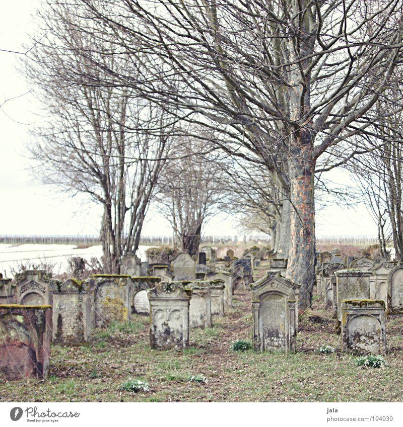 Bet Hachajim Himmel alt Pflanze Baum Landschaft ruhig Gefühle Wiese Gras Tod Religion & Glaube Stein Kraft Vergänglichkeit Hoffnung Vergangenheit