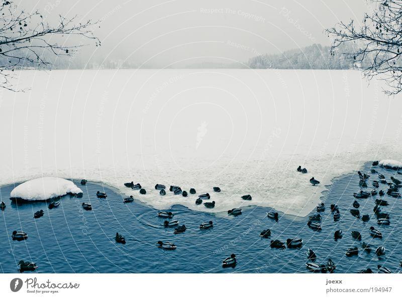 Durchhalten Wasser Winter kalt Schnee Menschengruppe See Eis Zusammensein Vogel Frost Tiergruppe Seeufer Zusammenhalt