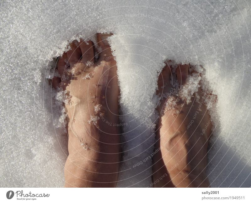 Abkühlung... Haut Pediküre feminin Fuß 1 Mensch Urelemente Winter Eis Frost Schnee frieren Coolness kalt nackt weiß Tapferkeit Selbstbeherrschung Klima Kühlung