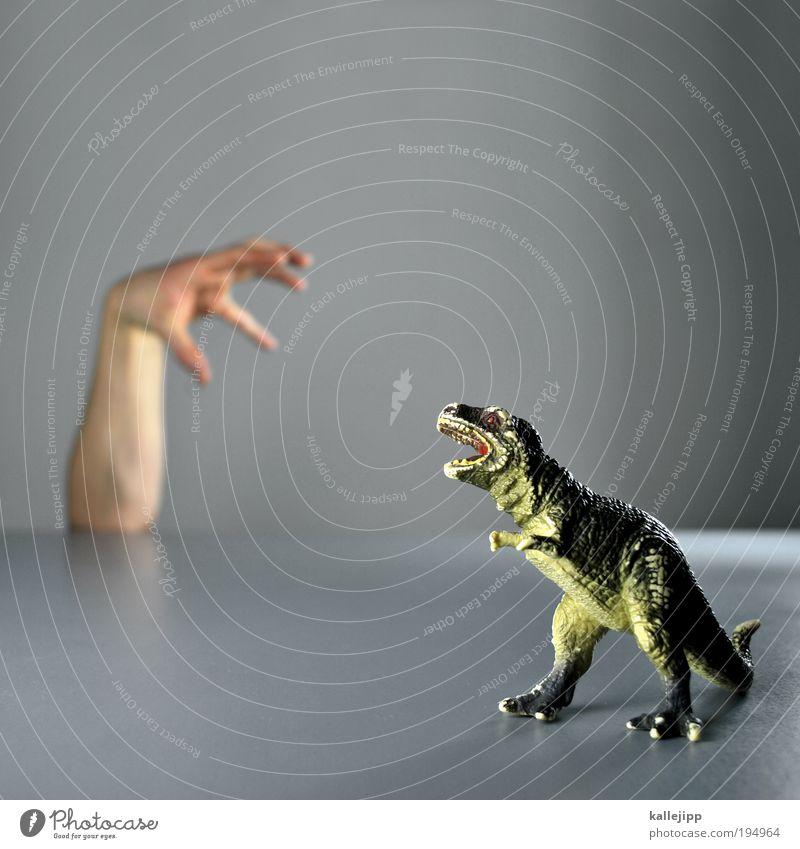spielkamerad Arme Hand Finger Tier Tiergesicht Krallen Pfote 1 Tierjunges Jagd kämpfen Revier Kraft Dinosaurier Echsen Urzeit ausgestorben Angriff Defensive