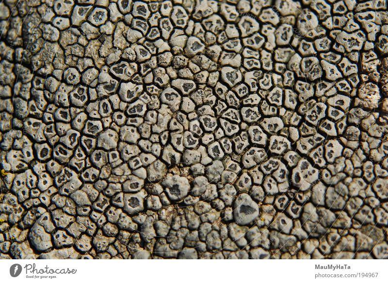 Flechte Stil Design Natur Sonne exotisch Felsen Berge u. Gebirge Mikrowelle Stein alt Coolness dunkel authentisch fantastisch frei schön einzigartig klein