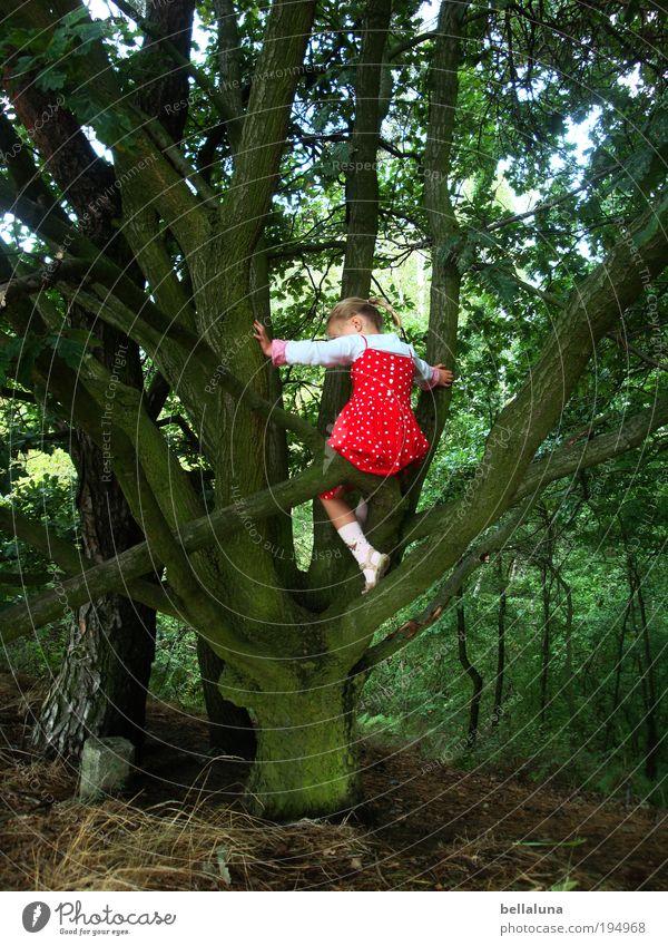 Farbklecks Mensch Kind Baum Mädchen Freude Leben Glück Stimmung Kindheit Kraft Erfolg Fröhlichkeit Klettern Vertrauen Lebensfreude Baumstamm