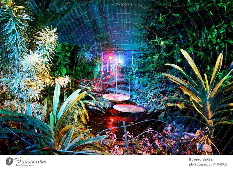 Traumwelt Natur Wasser Pflanze Gefühle träumen Wald Umwelt Urwald Landwirtschaft mehrfarbig Museum Produktion Gärtnerei