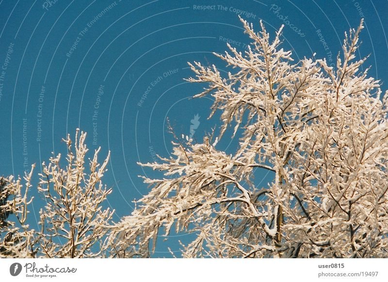 Winterbaum Baum Winter Schnee Blauer Himmel