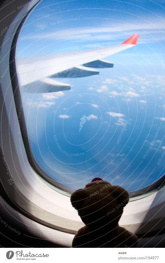 Fensterplatz Himmel Ferien & Urlaub & Reisen Wolken Freiheit lustig Luft träumen Freundschaft Horizont fliegen frei Flugzeug Reisefotografie Luftverkehr